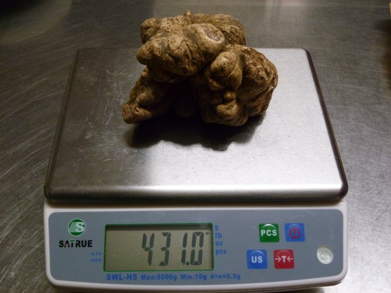 big truffle